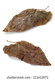 two brown leaf, isolated on a white background