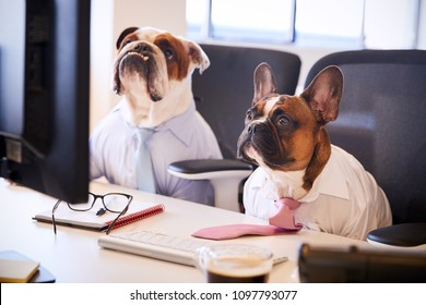 Two Bulldogs Dressed As Businessmen At Desk With Computer