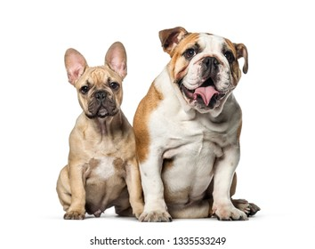 Two bulldogs, French and english, sitting on white background
