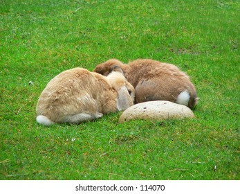 Two bunny rabbits huddled together.