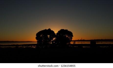 Two bushes hiding the sunrise, NZ