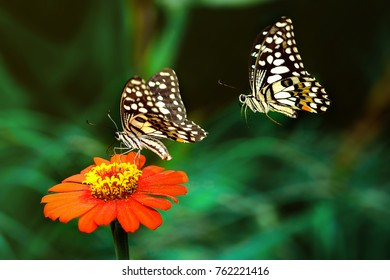 Two butterflies with flowers