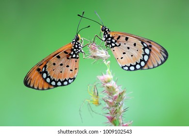 two butterflies with a green background
