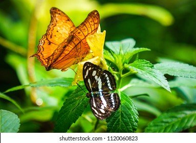 Two butterflies in a green park