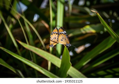 Two butterflies parring. Sitting on a leaf. Beautiful. - Shutterstock ID 1935311125