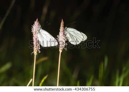 Two Butterflies Sleeping Night Stock Photo Edit Now 434306755