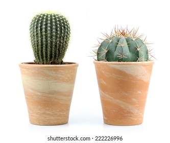 two cactus on a white background