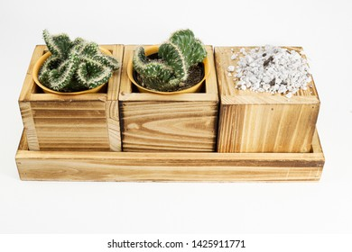 Two cactus succulent in square wood planter with planting material and substrate