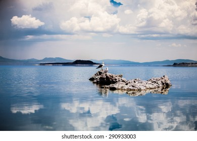 Two California Gulls on a Lake Rock with Clouds Reflecting on the Water