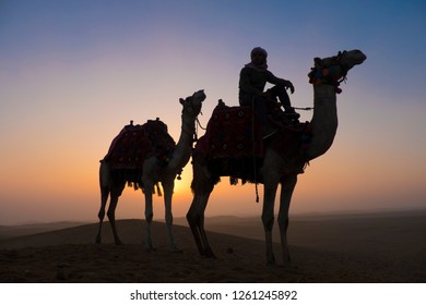 Two camels in the desert at sunrise with a man on the back