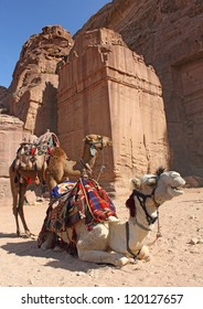 two camels near ancient ruins, Petra, Jordan