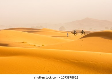 two camels and one guide man walking by Sahara desert