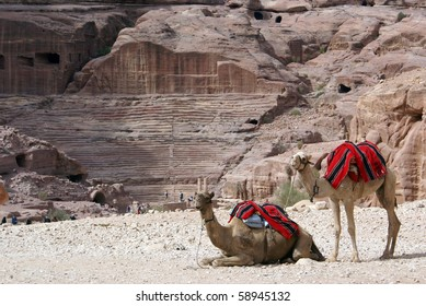Two camels and roman theater in Petra, Jordan