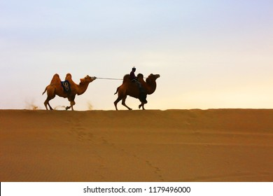 two camels walking in desert