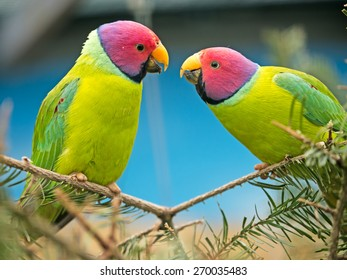 two canaries sitting on a branch teasing each other