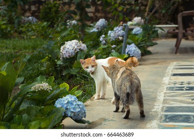 two cat in the garden