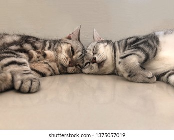 Two cat sleeping