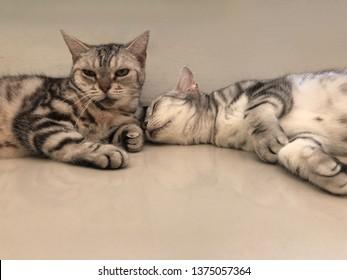 Two cat sleeping