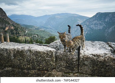 Two cats in the ancient ruins