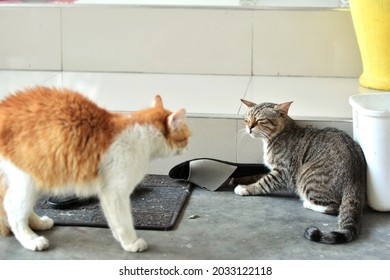 two cats armwrestling fight battle. side view of two cats facing each other. one cat is raising fur
