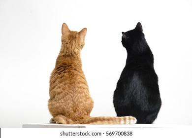 1000+ Cat Back Stock Images, Photos \u0026 Vectors