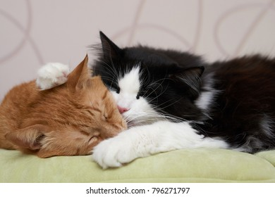 Two cats, black and white is sleeping together.
