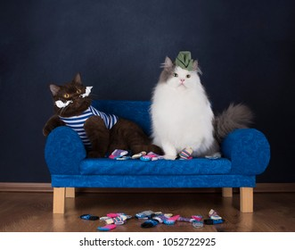 two cats choose socks sitting on the couch