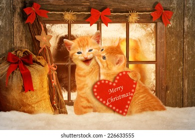 two cats at Christmas sitting in front of a window in the snow and holding a red heart