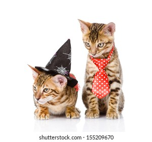two cats in costume for a masquerade. isolated on white background
