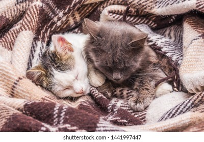 Two cats covered with a blanket sleeping in bed
