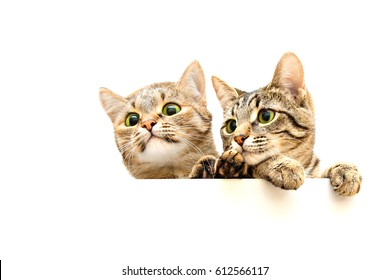 Two cats curiously peeking out from behind the white background