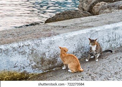 Two cats fighting at the docs near sea