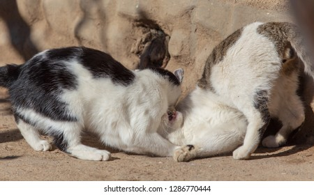Two cats fighting in nature .