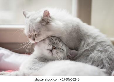 zwei Katzen, die im Winter zu Hause auf rotem Bett liegen