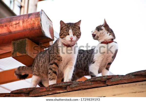 two cats on a house roof