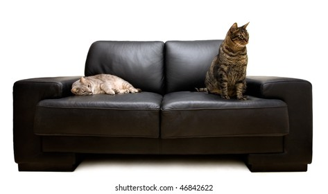 two cats on a sofa