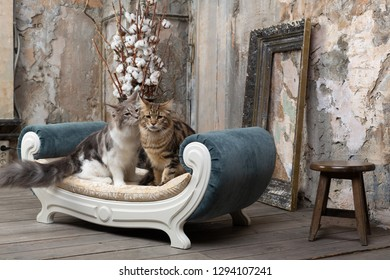 Two cats on the sofa indoor