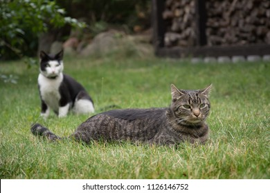 Two cats - one lying and the other sitting in grass in a garden