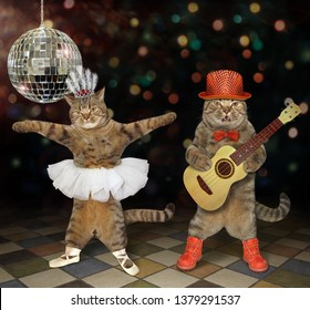 The two cats perform in a night club. One plays the acoustic guitar and the second dances.