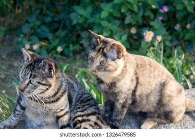 Two cats relaxing together under the sun in public park in Osaka, Japan