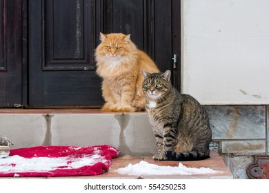 Two cats sitting in front of the house