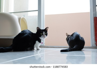 Two cats sitting on the floor beside a sandbox .
