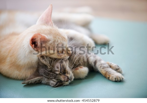 two cats sleep on the floor , select focus eye the one upper