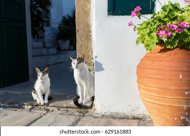 Two cats standing by the house