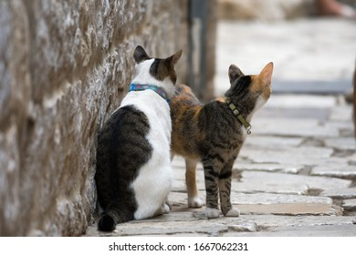 Two cats in the stone street of Trogir, Dalmatia, Croatia