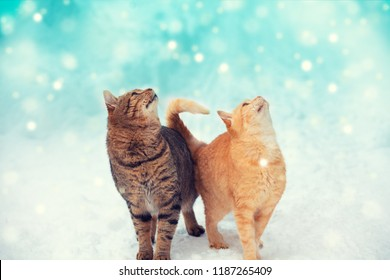 Two cats walking outdoors, enjoing snow. Cats looking at snowflakes