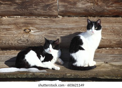 Two cats at wooden house in winter sunny day