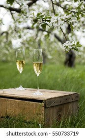 Two champagne flutes stand on an apple box in a field of apple-trees blooming.