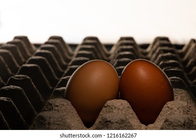 Two chicken eggs leaning on each other in the theater
