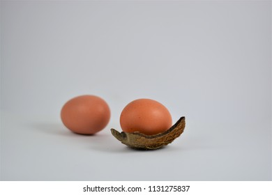 Two chicken eggs on a white background
